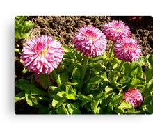 Lovely small flowers Canvas Print