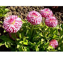 Lovely small flowers Photographic Print