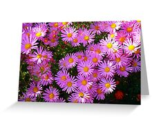 Pink Asters Greeting Card