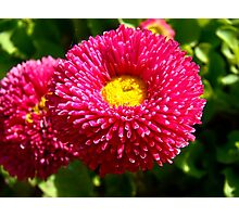 Lovely small flowers 4 Photographic Print