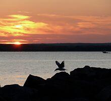 Naragansett Bay, Rhode Island - The Summer Flies By! by Jack McCabe