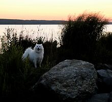 Naragansett Bay, Rhode Island  - Sylvie Loves a Great Sunset! by Jack McCabe
