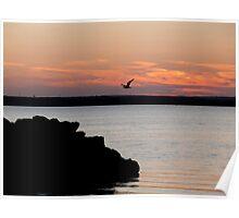 Naragansett Bay, Rhode Island - Flying in for Supper Poster
