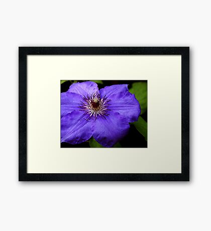 Purple Blue Framed Print