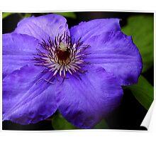 Purple Blue Poster