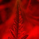 Natures Christmas Card Holiday Tree  by velveteagle