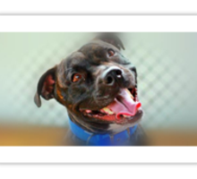 Staffordshire Terrier Sticker