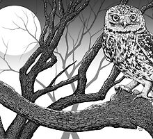 Night Owl by Robert Marzullo by Robert Marzullo