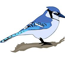 Blue Jay Bird by Krista Casal