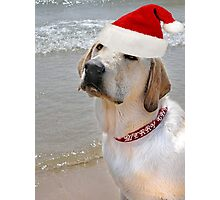 Christmas Pup Photographic Print