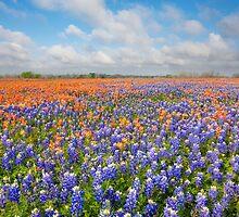 Bluebonnets and Paintbrush near Whitehall, Texas 2 by RobGreebonPhoto