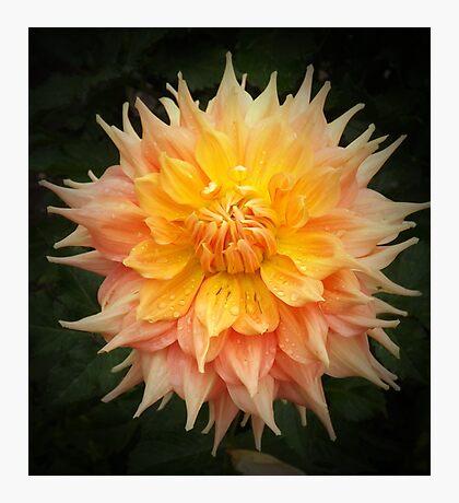Beautiful Orange Dahlia Macro Photographic Print