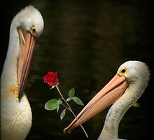 WOW!  I won a challenge with ... Will you be my Valentine by myraj