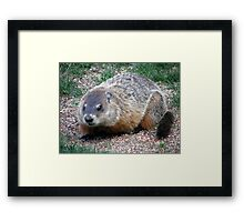 Chuck, the Groundhog Framed Print