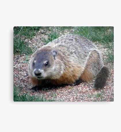 Chuck, the Groundhog Metal Print