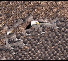 Feathered Eagle by Thomas Young