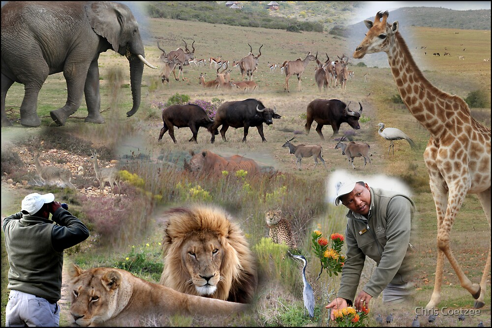 Garden Route Game Lodge Composition by Chris Coetzee