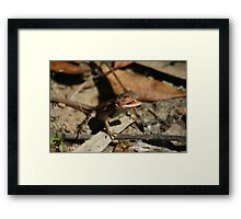 Mountain Dragon Framed Print