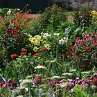 An English Country garden by Justine Humphries
