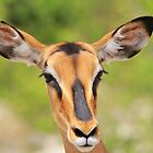Black Faced Impala - Portrait of Pure by LivingWild