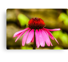 Purple Coneflower - Single Canvas Print