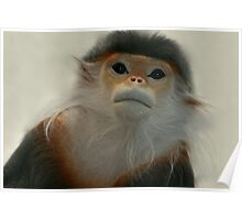 Critically Endangered Doucs Langur Poster
