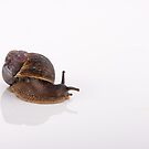 Gastropod by Mary Broome