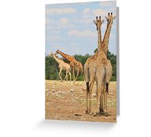 Giraffe - Jealousy and Funny Love Greeting Card