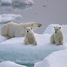 Polar Bear Family II by Steve Bulford