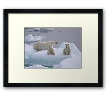 Polar Bear Family II Framed Print