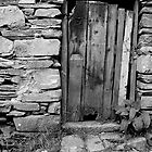 Door by Donal Lyne