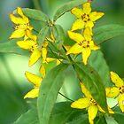Wild yellow flowers by vigor
