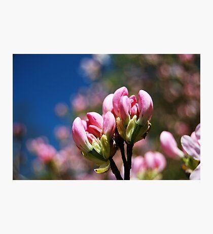 Blossom Bokeh Photographic Print