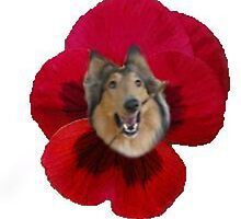 It's a Collie Flower! by tinypersistence