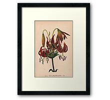 Turk's-cap Lily-Available As Art Prints-Mugs,Cases,Duvets,T Shirts,Stickers,etc Framed Print