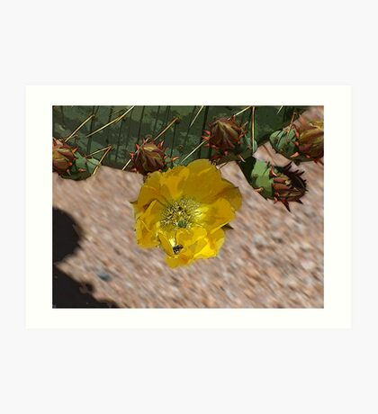 Cactus Crowns Art Print