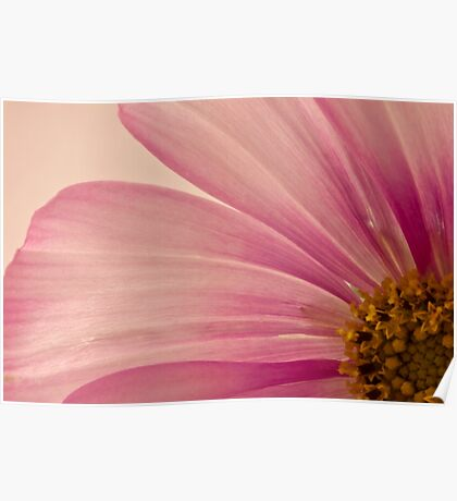 Pink Cosmo Macro  Poster
