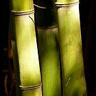 Sticks by Jamie Tucker