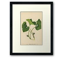 Wild Ginger-Available As Art Prints-Mugs,Cases,Duvets,T Shirts,Stickers,etc Framed Print