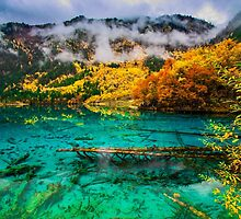 Five Flower Lake, JiuZhaiGou, China by Daniel H Chui