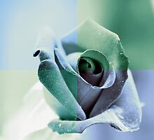 Winter Rose by Igor Shrayer