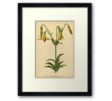 Canada Lily-Available As Art Prints-Mugs,Cases,Duvets,T Shirts,Stickers,etc Framed Print