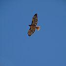 Take Flight by Garret