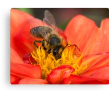 Bad table manners? Canvas Print