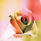 Summer Rose by Igor Shrayer
