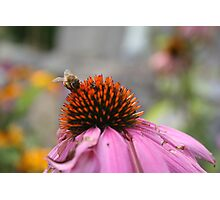 Mister Bumble Photographic Print