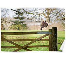 Flying Pheasant Poster