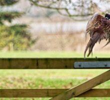 Flying Pheasant Sticker