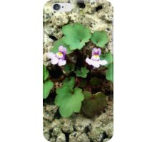 Small flower growing on the old rock wall iPhone Case/Skin