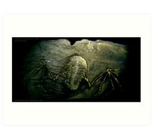 Mythical Flying Trilobite Fossil II Art Print